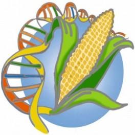 Tests Unitaires OGM